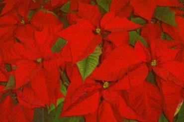 Jul til glede – jul til besvær